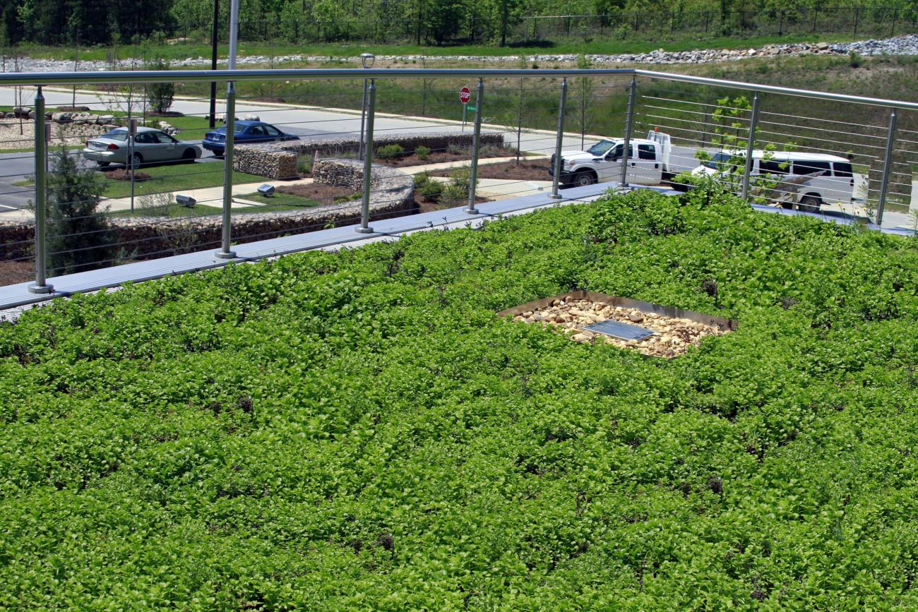Gullatte Associates specified Green Roof Plants and limited irrigation.